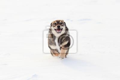 Щенок бежит ďî белому снегу