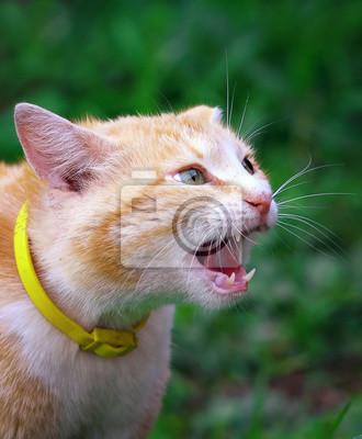 орущий кот