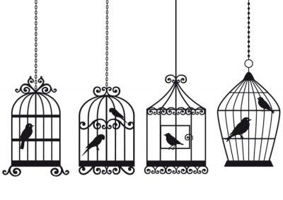 Plakat zabytkowe piasek dla kotów z ptaków