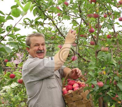 Zbiorów jabłek