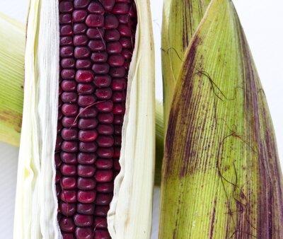 Plakat Zbliżenie Purple woskowa samodzielnie na białym tle