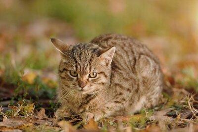 Plakat Zbliżenie zdjęcie kota w parku