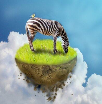 Plakat Zebra na kawałku ziemi