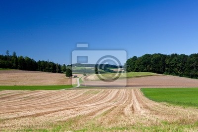 Plakat zebranych pola i samotne drzewo