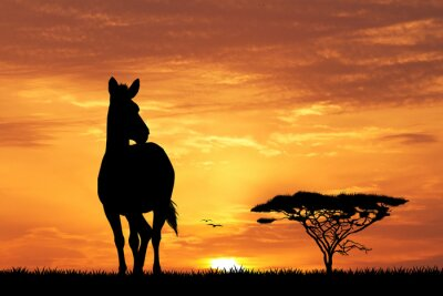 Plakat zebras silhouette at sunset
