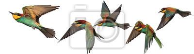 Plakat Zestaw egzotycznych ptaków na białym tle