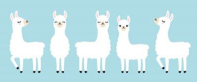 Plakat Zestaw ilustracji wektorowych słodkie białe lamy w różnych pozycjach.