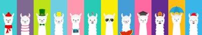 Plakat Zestaw Lamy alpaki. Ładny lama zabawny charakter kreskówka. Wszystkie sezony. Happy Valentines Christmas St Patrick day Easter Egg Bird Chicken Parasol. Santa kapelusz, słońce Płaska konstrukcja Kolor