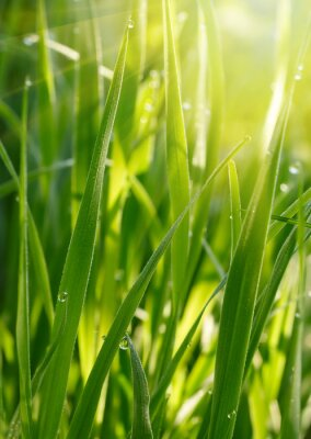 Plakat Zielona trawa w tle