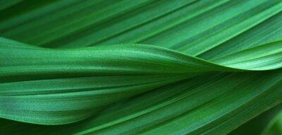 Plakat Zielone liście na tle