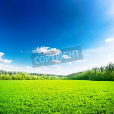 Plakat Zielone pole na błękitne niebo. Piękno przyrody w tle