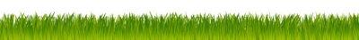 Plakat zielone realistyczny wektor łące trawy na białym tle
