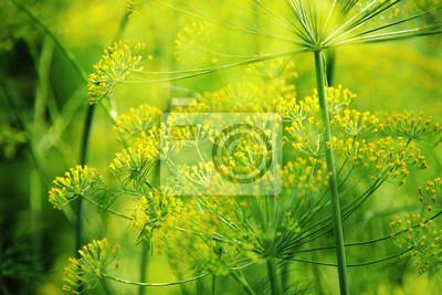 zielony koperek bliska zdjęcie