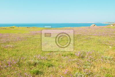 Zielony krajobraz z pola kwiatów.