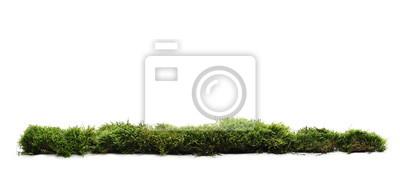 Plakat Zielony mech z trawą odizolowywającą na białym tle