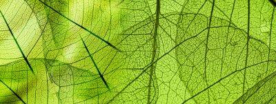 Plakat Zielonych liści tekstury