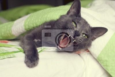 Plakat ziewanie kota