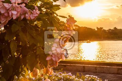 Plakat Złoty słońca refection do wody z różowym kwiatem; Piękna przyroda krajobraz lato