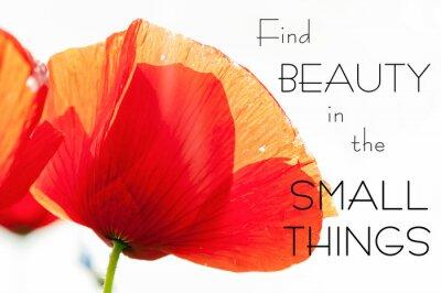 Plakat Znajdź piękno w małych rzeczach. Motywacja inspirujący cytat