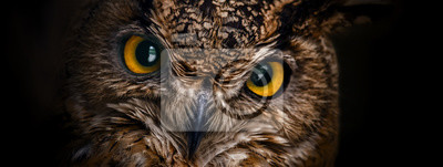 Plakat Żółci oczy rogaty sowy zakończenie up na ciemnym tle.