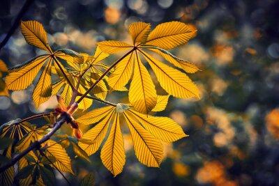 Żółte tło liści