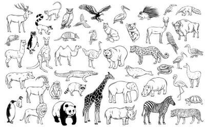 Plakat Zoo animals traditional