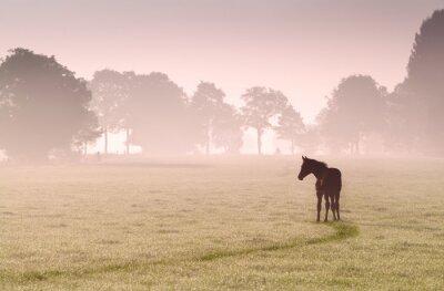 Plakat źrebię na pastwisku sylwetka w mgle