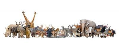 Plakat zwierząt na świecie