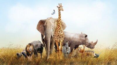 Plakat Zwierzęta Safari w Afryce Kompozyty
