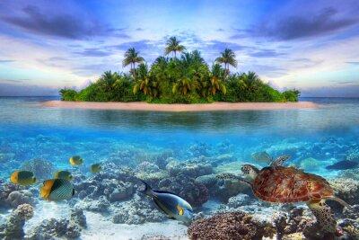 Plakat Życie morskie na tropikalnej wyspie Malediwów