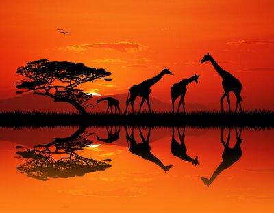 Plakat Żyrafa sylwetka w krajobraz Afryki