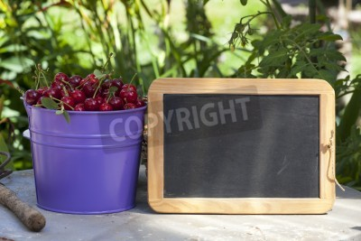 A metal bucket filled with freshly picked cherries from the garden and a blank writeable Slate Board with copy space
