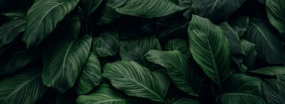 Tapeta abstract green leaf texture, nature background, tropical leaf
