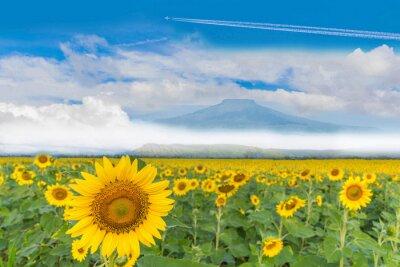 Abstrakt piękny słonecznikowej rośliny pole z piękną niebieskie niebo chmurą i Tajlandia Fuji góry tłem.