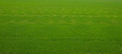 Tapeta Agricultural crops with all green areas