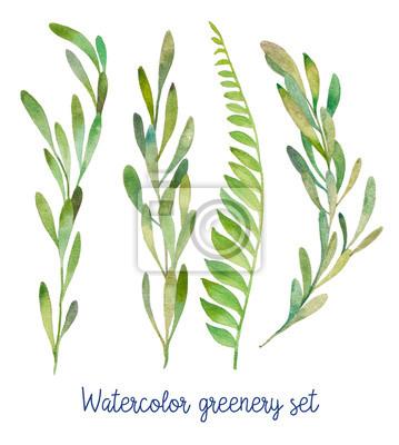 Tapeta Akwarela zieleni ustawiony. Ręcznie rysowane dzikie rośliny zielone na białym tle.