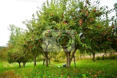 Tapeta Apple trees sad