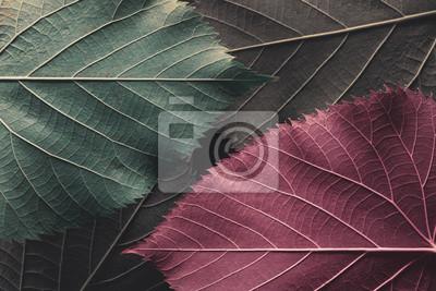 Tapeta Autumn leaves, natural background.