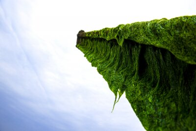 Beautiful green seaweed algae mossy on the abandoned anchor background sand wave,island and blue sky.