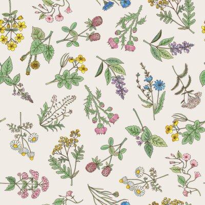 Tapeta Bez szwu deseń różnych wyciągnąć rękę zioła i kwiaty