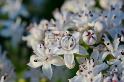 Białe kwiaty makro pole
