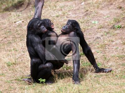 Секс у горилл