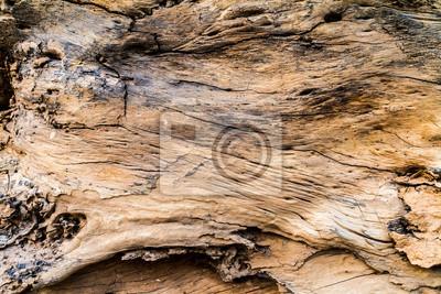 Tapeta Brązowy drewna log drewna