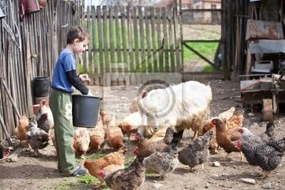 Chłopiec Kraj karmienie zwierząt