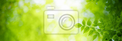 Tapeta Closeup nature view of green leaf on blurred greenery background under sunlight with bokeh and copy space using as background natural plants landscape, ecology cover page concept.