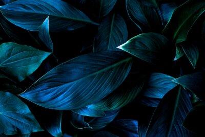 Tapeta closeup nature view of tropical leaf background, dark tone concept