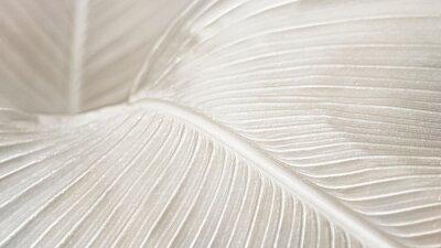 Tapeta Creamy bird of paradise leaf background design resource