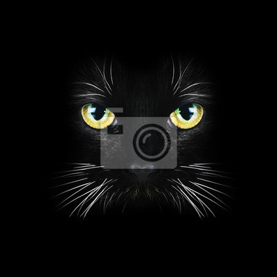 Tapeta Czarny Kot Czarny Młody Wzorzec Redropl