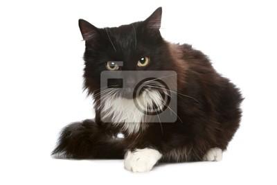 Tapeta Czarny Kot Na Białym Tle Czarny Młody Piękny Redropl