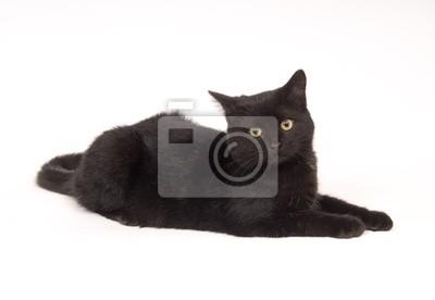 Tapeta Czarny Kot Ustanawiające I Patrząc Prosto Czarny Tło